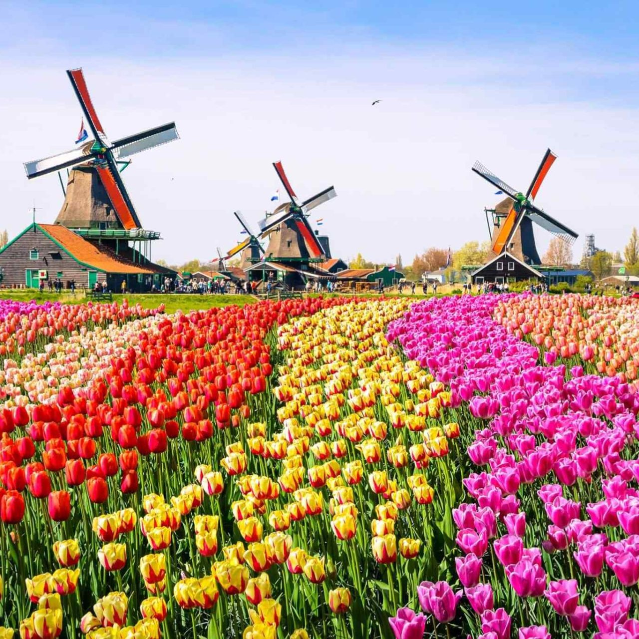https://oltintourism.uz/wp-content/uploads/2019/06/destination-netherlands-01-1280x1280.jpg